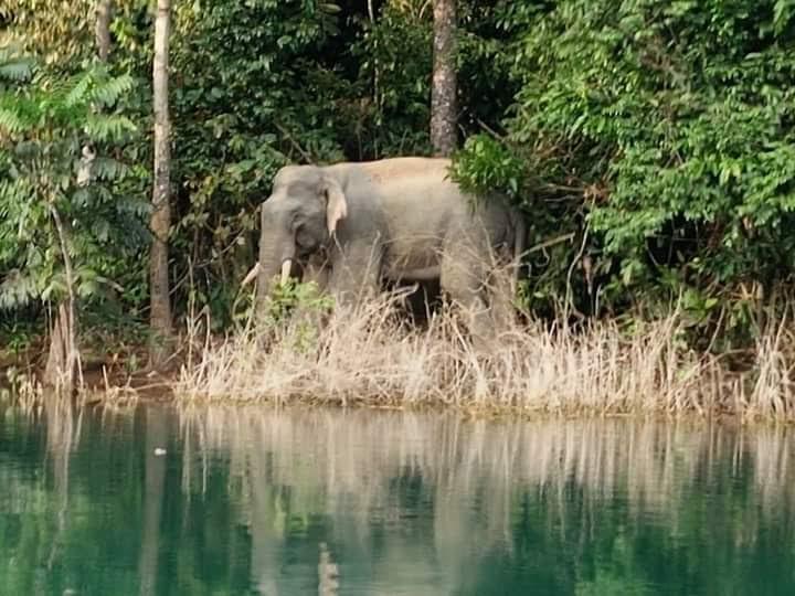 khao-sok-elephant